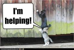 helping cats